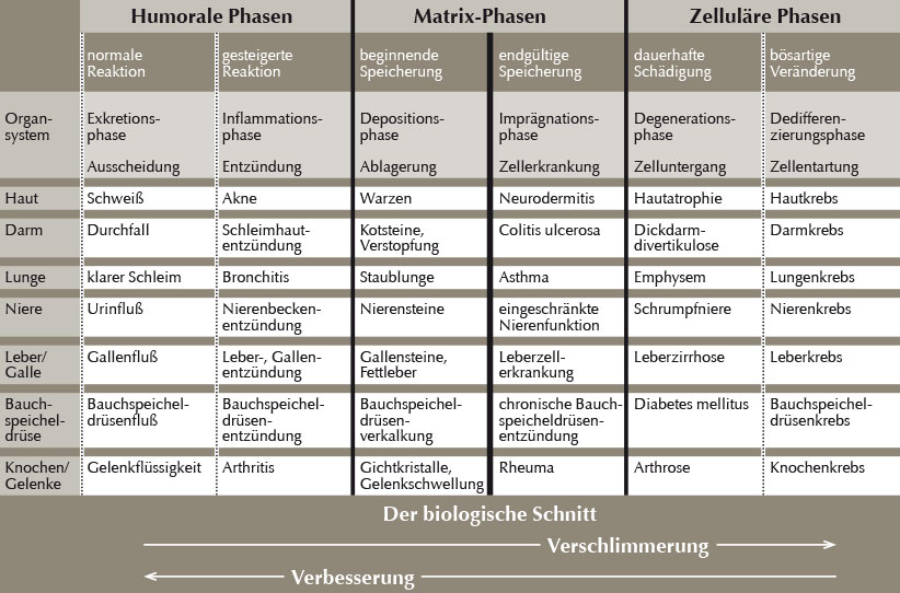6-Phasen-Tabelle_w